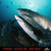 Fubar&Dj rhum - Shark infested waters